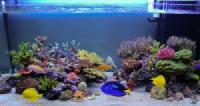 Tên gọi và đặc điểm một số loại cá cảnh phong thủy